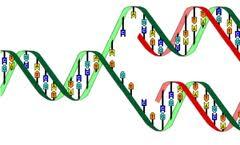 Bài 1: Gen - Mã di truyền - và quá trình tự nhân đôi ADN