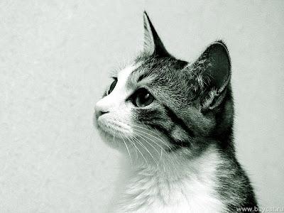 funny cat-8