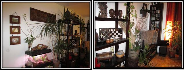 Déco sala Thai compo végétale