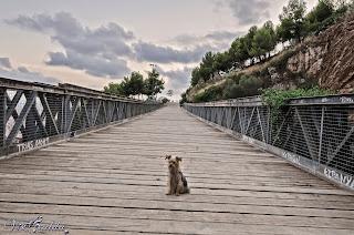 Luna i el Pont del Guinardó (Nikon D7000)