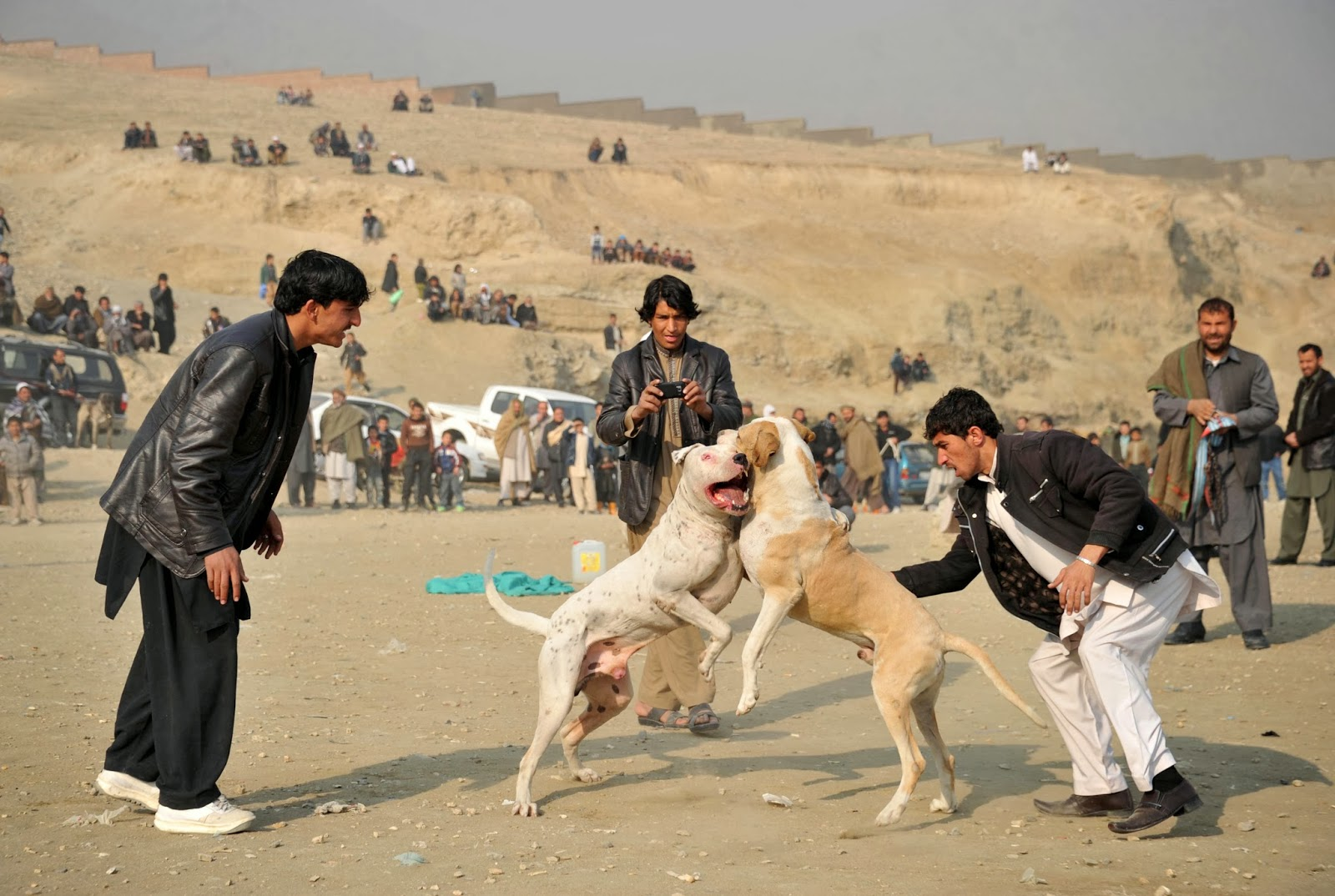 Afghanistan, Animals, Animals Fight, Banned, Comeback, Dog, Dogfighting, Fight, Kabul, Making, Match, Owner, Regime, Sports, Taliban,