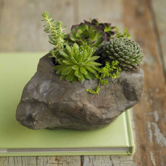 Succulent Rock Garden Ideas Photograph similar version of