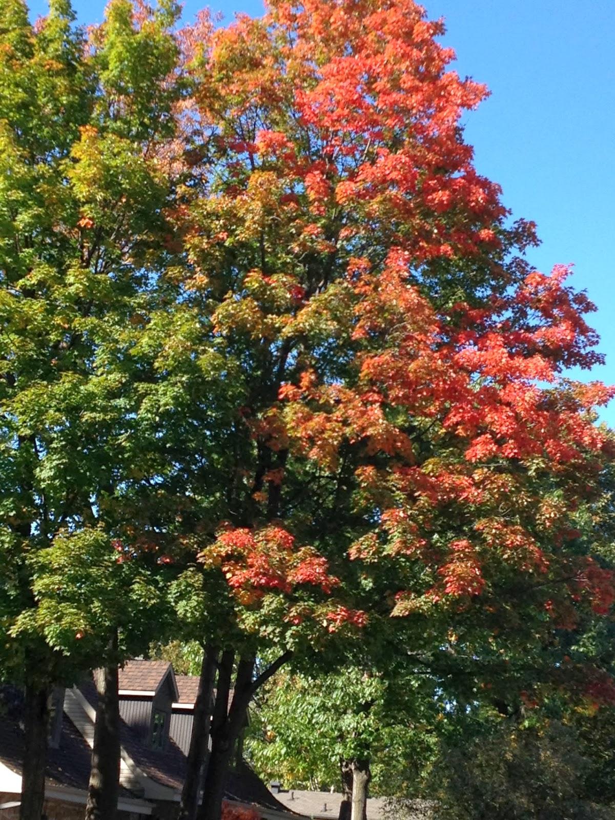Keats Autumn: Wisdom For Women: Autumn Poem By John Keats, 1819
