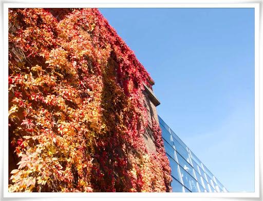 Husvägg med klättrande orange lövväxter