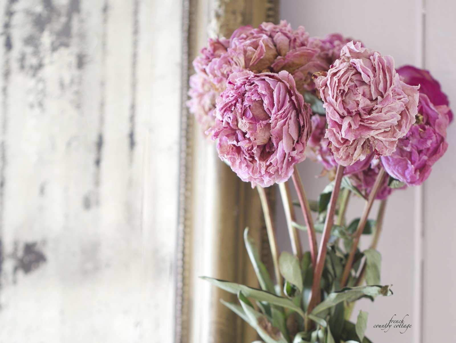 The secret to perfectly dried peonies french country cottage dried peonies close up izmirmasajfo