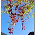 Autumn in Bolzano