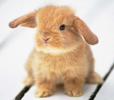 imágenes de tiernos conejitos