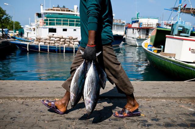 اسواق المالديف