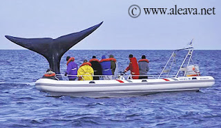 Argentina Whale Watching tour , only from Puerto Piramides