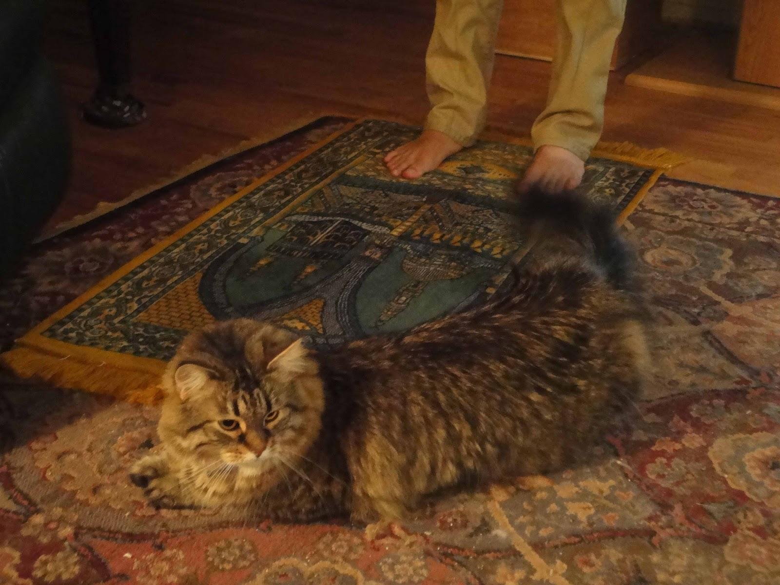 Cats in islam - muslimconverts.com