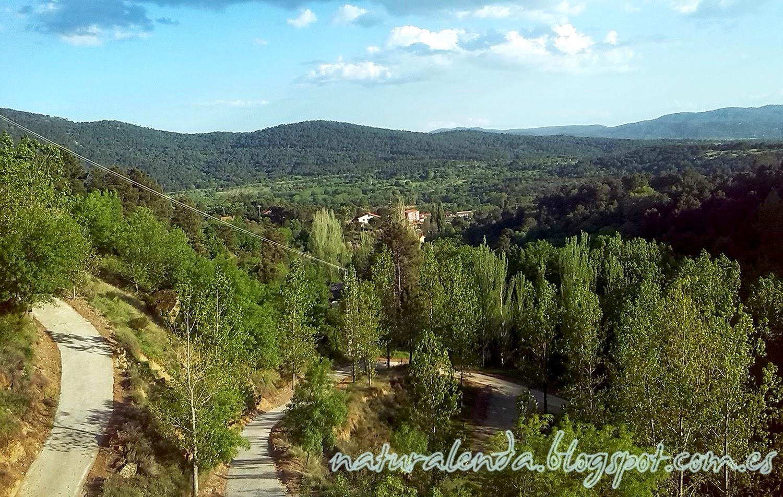 bosque de meseta