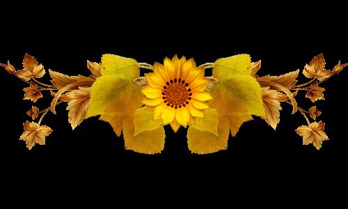 paradise sunflower