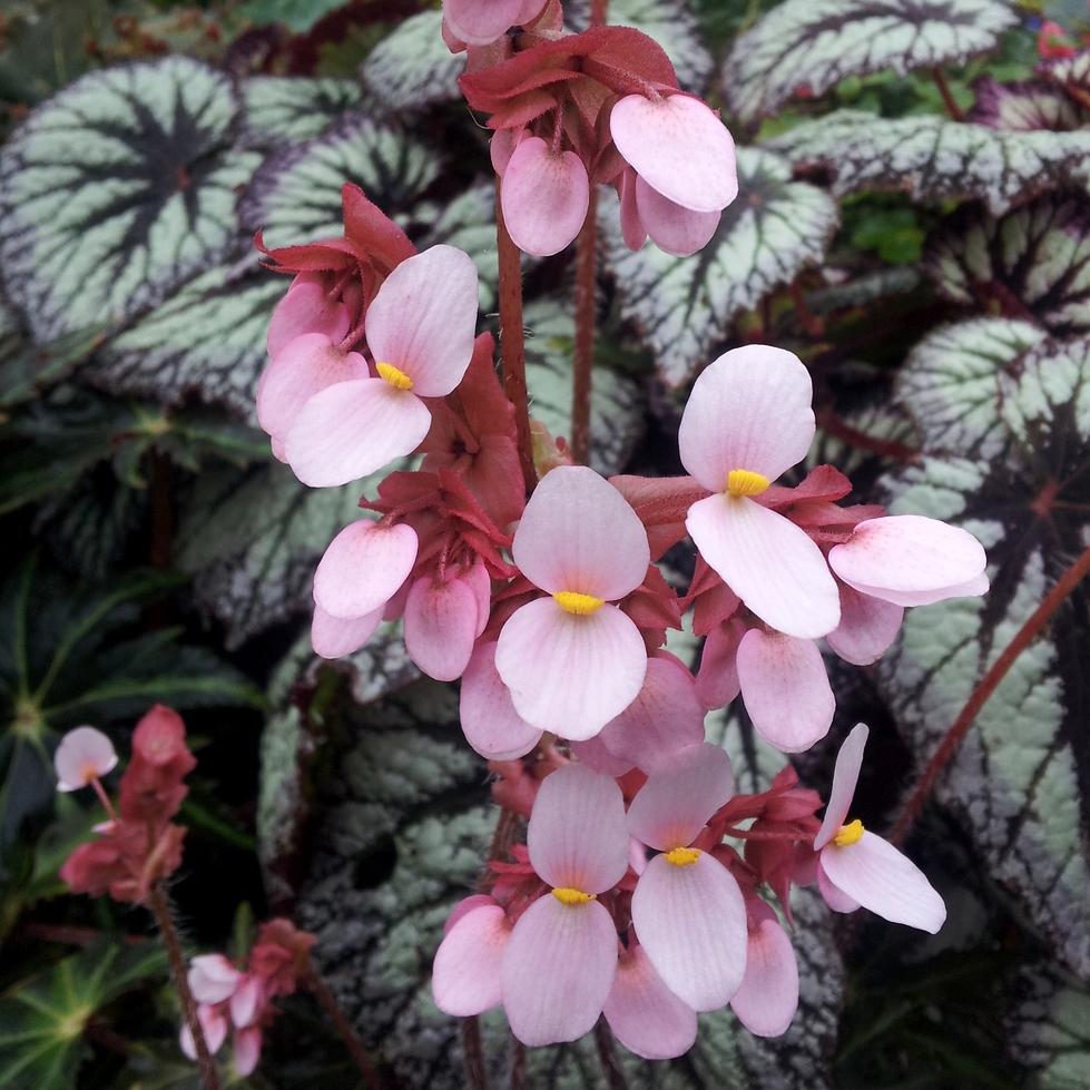 Plant Zone: Flower Friday