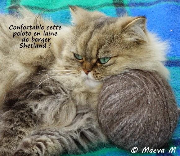 Mon chat frimousse frimousse et la loi d 39 allen - Loi sur les chats et le voisinage ...