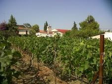 Orei- Les vignes du Seigneur