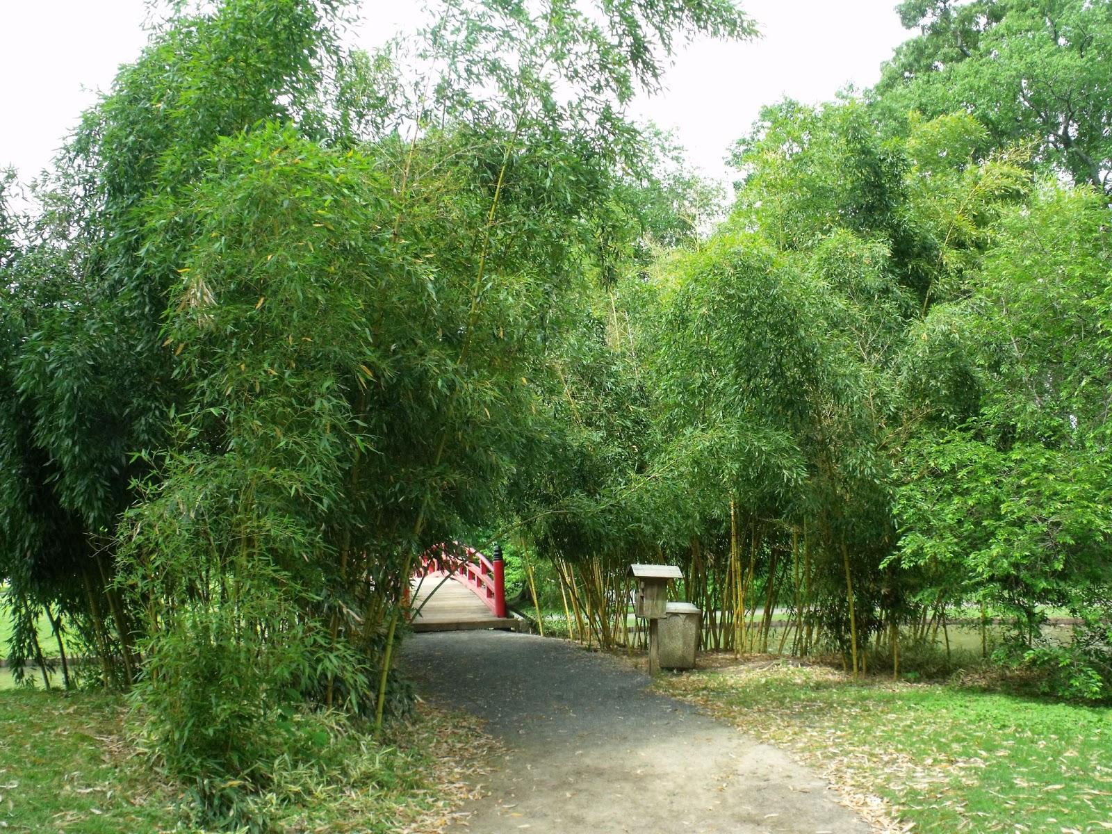 Azaleas in bloom for Garden trees memphis