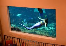 Jacobs Clan Waikiki Aquarium Day