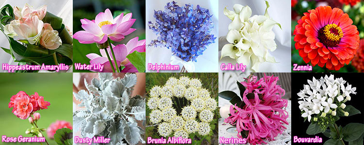 CP Flowers Top 10 Wedding Flowers By Months