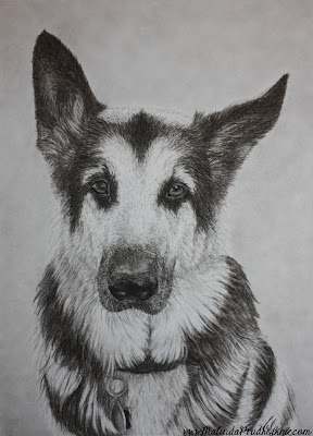 charcoal artist, charcoal drawing, pet art, original artwork, german shepherd, dog portrait, pet portrait