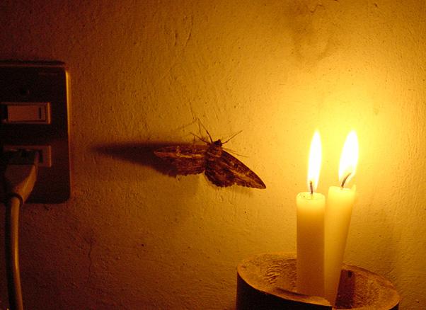 moth-flame1.jpg