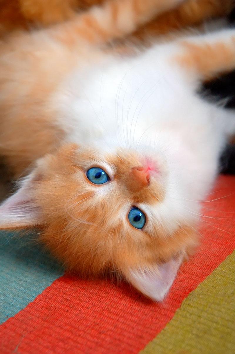 Lindo gatito jugando en la alfombra de colores | celebrity style guide