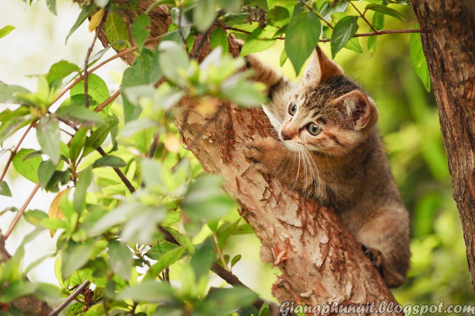 Album ảnh về chú mèo đáng yêu Anh-meo-2