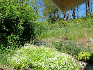 Green scenery next to Sequim vacation rental