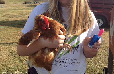 Melissa's daughter helps medicate the flock, a process that took 2 hours every day.