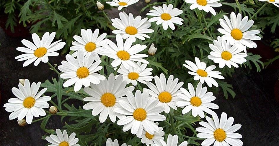 Arte y jardiner a dise o de jardines plantas perennes con for Diseno de jardines 3d 7 0 keygen