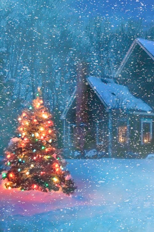 beautiful christmas tree on a snowy evening incredible pics. Black Bedroom Furniture Sets. Home Design Ideas