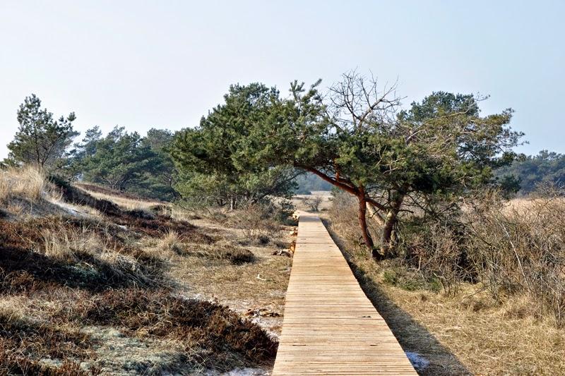 Ostsee - Erinnerungen und Vorfreude | Dünen