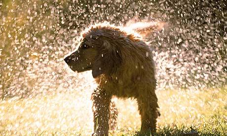 girl scout blog alabama celebrity dog wash for girl scout