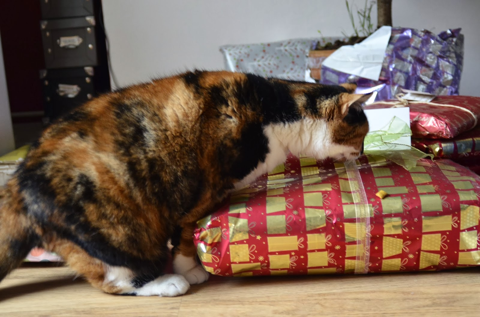 Just in Style rescue cat pickle looking at christmas presents