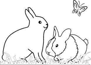 Ausmalbild kaninchen