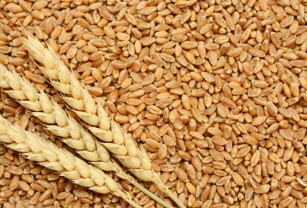 grains til gram