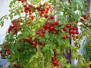 Nawozy naturalne bez zapachu – nawożenie na balkonie