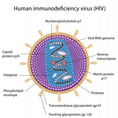 EL VIH