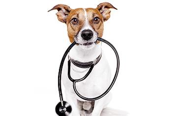 Plano de saúde para cachorro