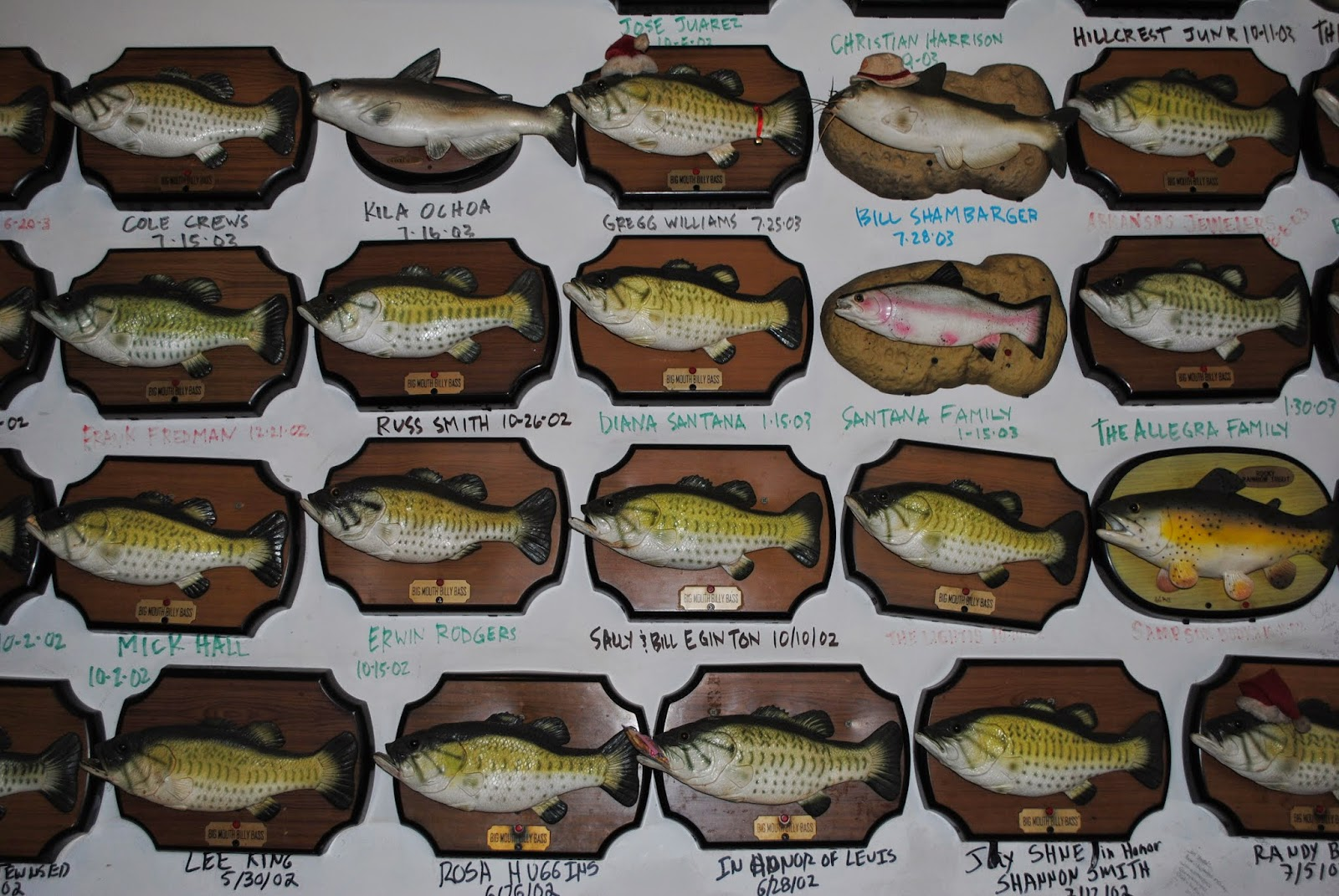 The carpetbagger billy bass adoption center for Big mouth billy bass singing fish