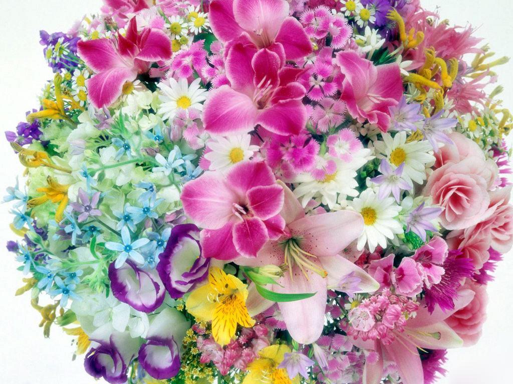 desktop flowers flowers wallpapers