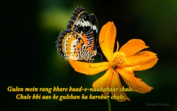Love shayari of true love Download shayari wallpaper HD