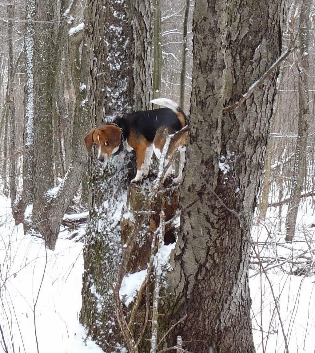 canine tree climbing