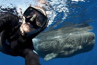 Amazing Photos of Whales
