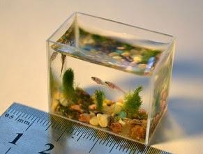 miniature aquarium fish fry