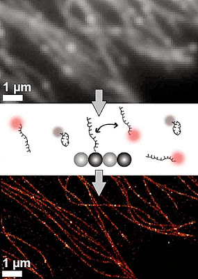 Molecular Beacons Sharpen Images