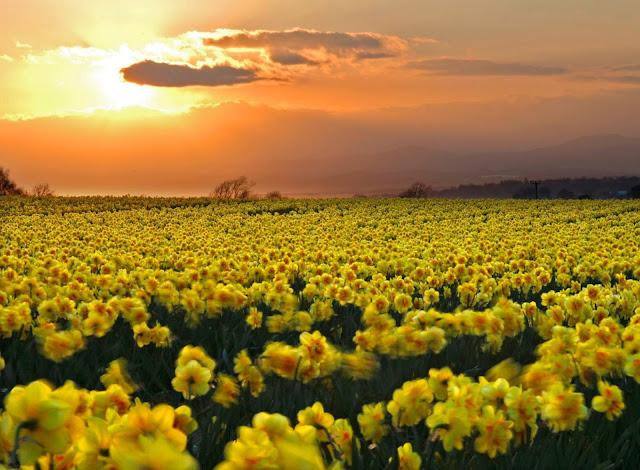 Hình ảnh hoa đẹp 11