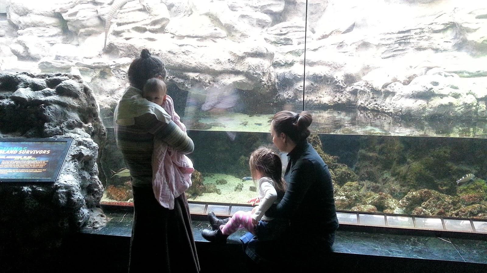 Denver Downtown Aquarium Discount Tickets Happy Memorial