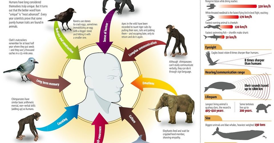 what distinguishes humans from other animals What separates humans from animals 10 popular ideas leave a reply back in 1994 no single, essential difference separates human beings from other animals.