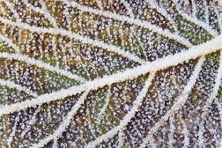 slana na odpadlem listu │ zima │ prihaja tudi za druge
