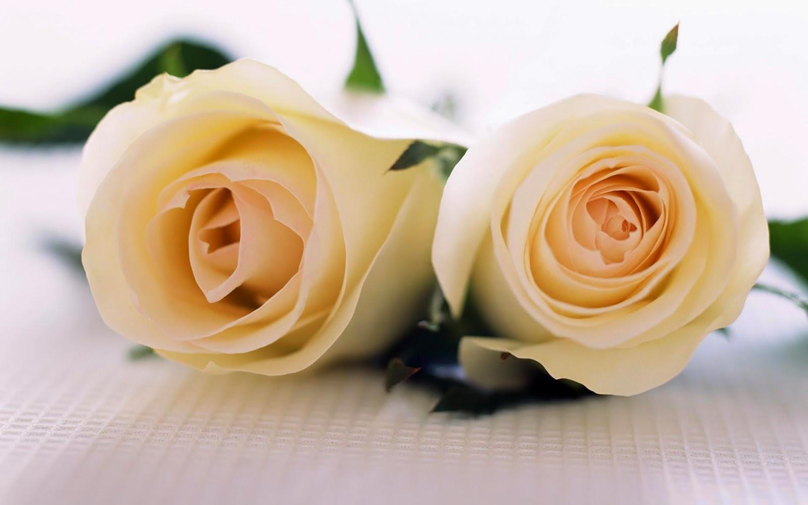Hd wallpapers beautiful flowers for a beautiful girl izmirmasajfo